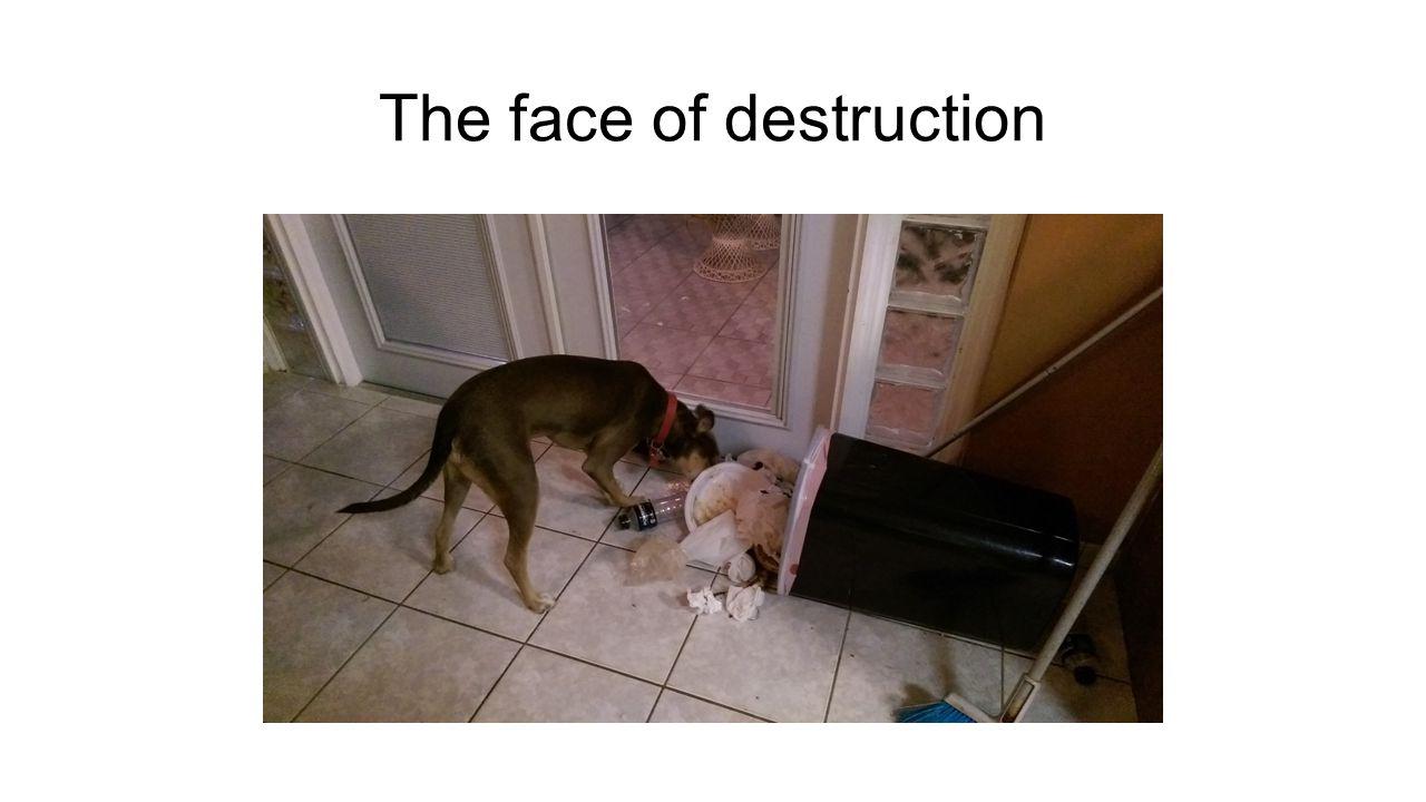 The face of destruction