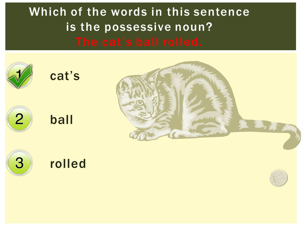 cat's ball rolled Which of the words in this sentence is the possessive noun.