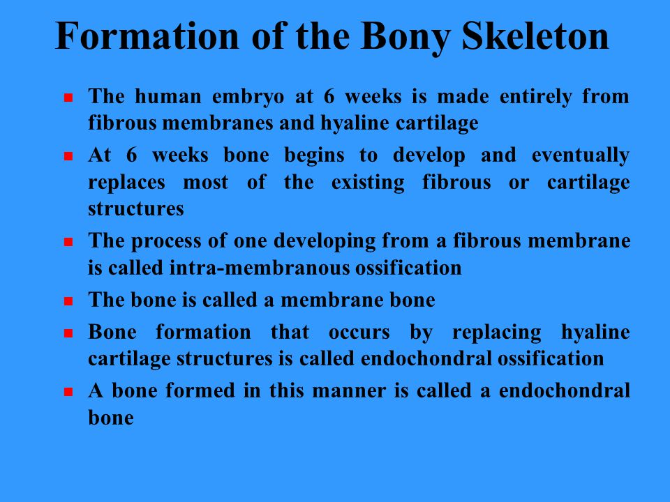 Formation of the Bony Skeleton The human embryo at 6 weeks is made entirely from fibrous membranes and hyaline cartilage At 6 weeks bone begins to develop and eventually replaces most of the existing fibrous or cartilage structures The process of one developing from a fibrous membrane is called intra-membranous ossification The bone is called a membrane bone Bone formation that occurs by replacing hyaline cartilage structures is called endochondral ossification A bone formed in this manner is called a endochondral bone