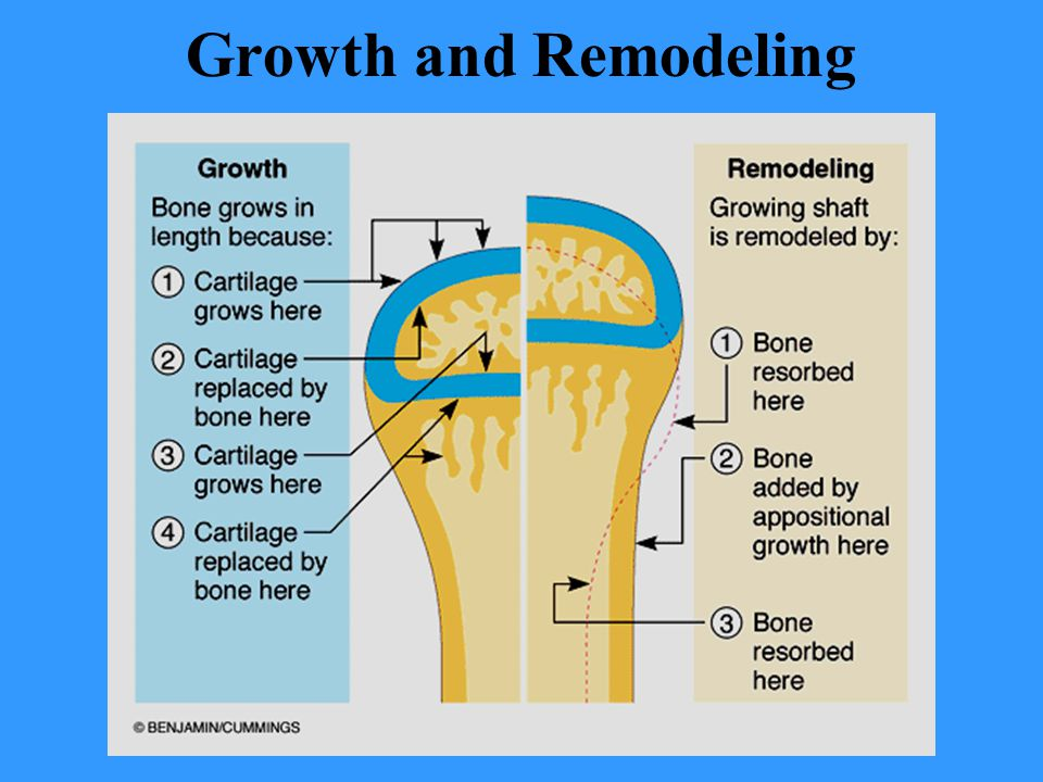 Growth and Remodeling