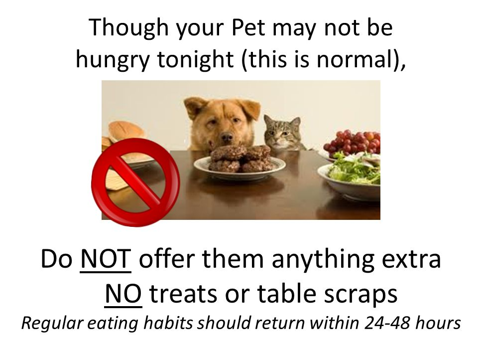 Offer your Pet Normal Food & Water when you get home