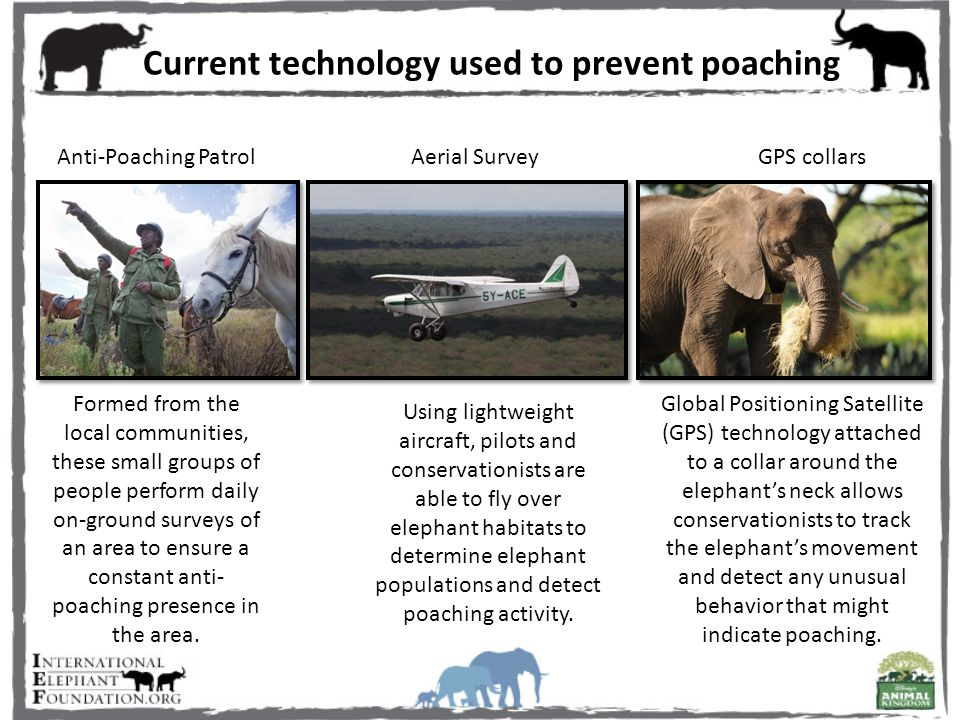 Current technology used to prevent poaching Anti-Poaching PatrolAerial SurveyGPS collars Formed from the local communities, these small groups of people perform daily on-ground surveys of an area to ensure a constant anti- poaching presence in the area.