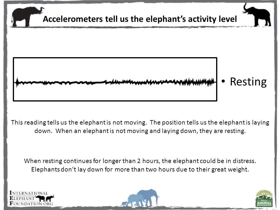 Accelerometers tell us the elephant's activity level When resting continues for longer than 2 hours, the elephant could be in distress.