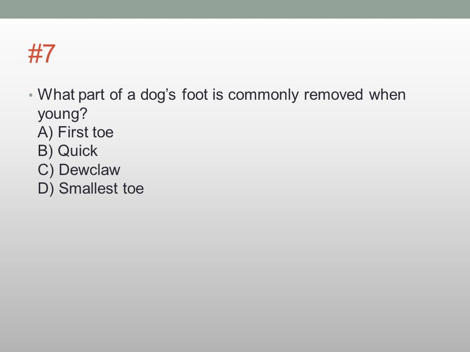 #7 What part of a dog's foot is commonly removed when young.