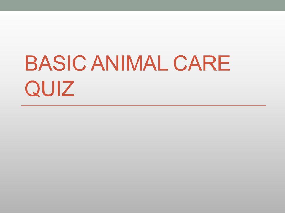 BASIC ANIMAL CARE QUIZ