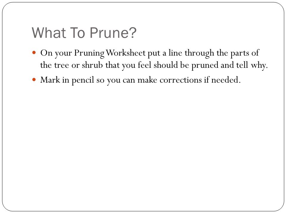 What To Prune? On your Pruning Worksheet put a line through the parts of the tree or shrub that you feel should be pruned and tell why. Mark in pencil