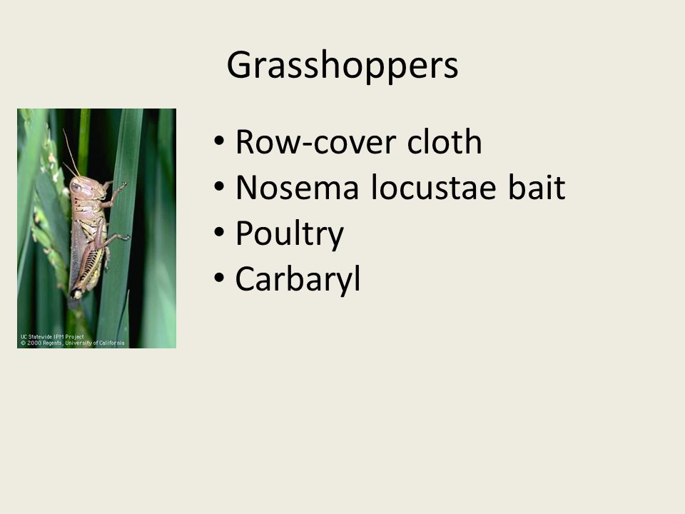 Grasshoppers Row-cover cloth Nosema locustae bait Poultry Carbaryl