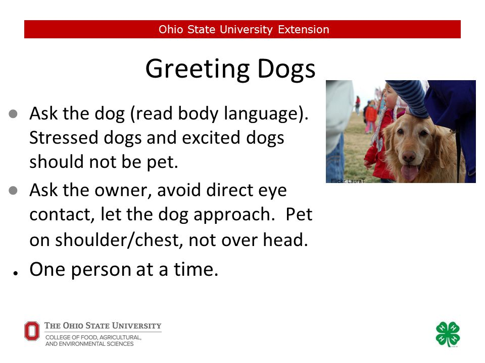 Greeting Dogs ●Ask the dog (read body language). Stressed dogs and excited dogs should not be pet.