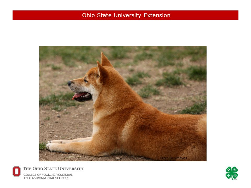 Ohio State University Extension Flickr: Jim's Photos 1