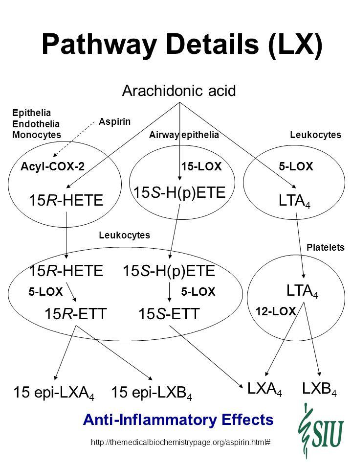 Arachidonic acid http://themedicalbiochemistrypage.org/aspirin.html# Acyl-COX-2 Aspirin Epithelia Endothelia Monocytes 15-LOX 5-LOX 15S-H(p)ETE 15S-ET