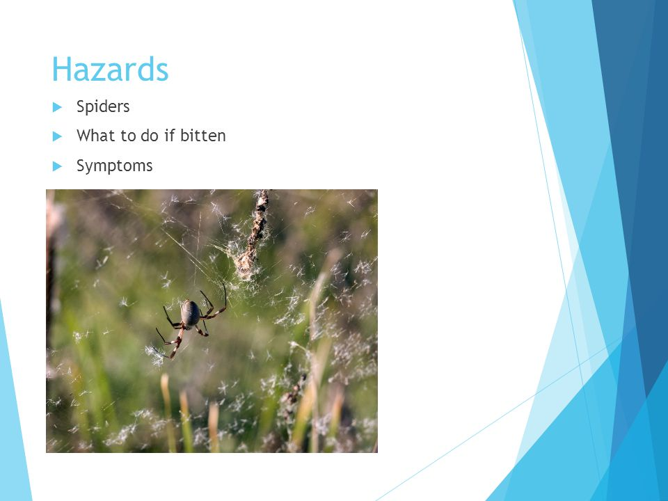 Hazards  Spiders  What to do if bitten  Symptoms