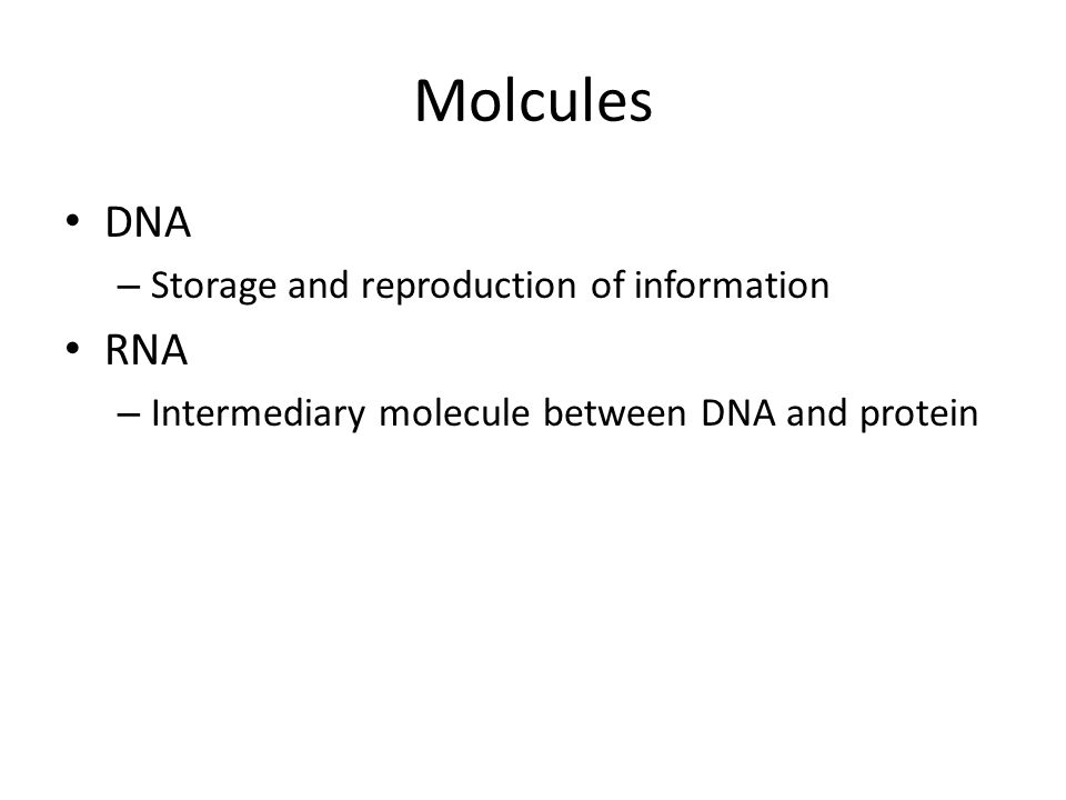 Molcules DNA – Storage and reproduction of information RNA – Intermediary molecule between DNA and protein