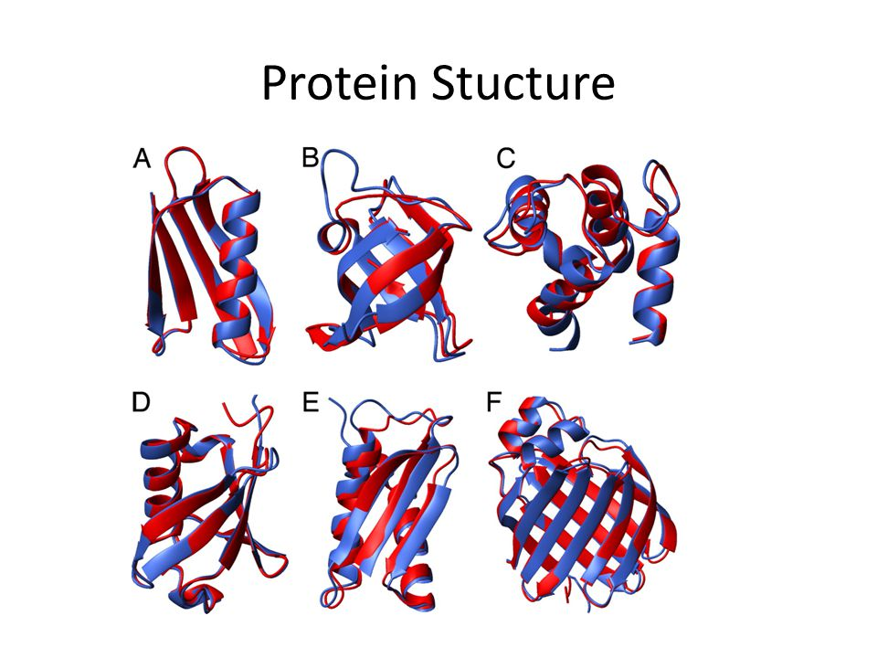 Protein Stucture