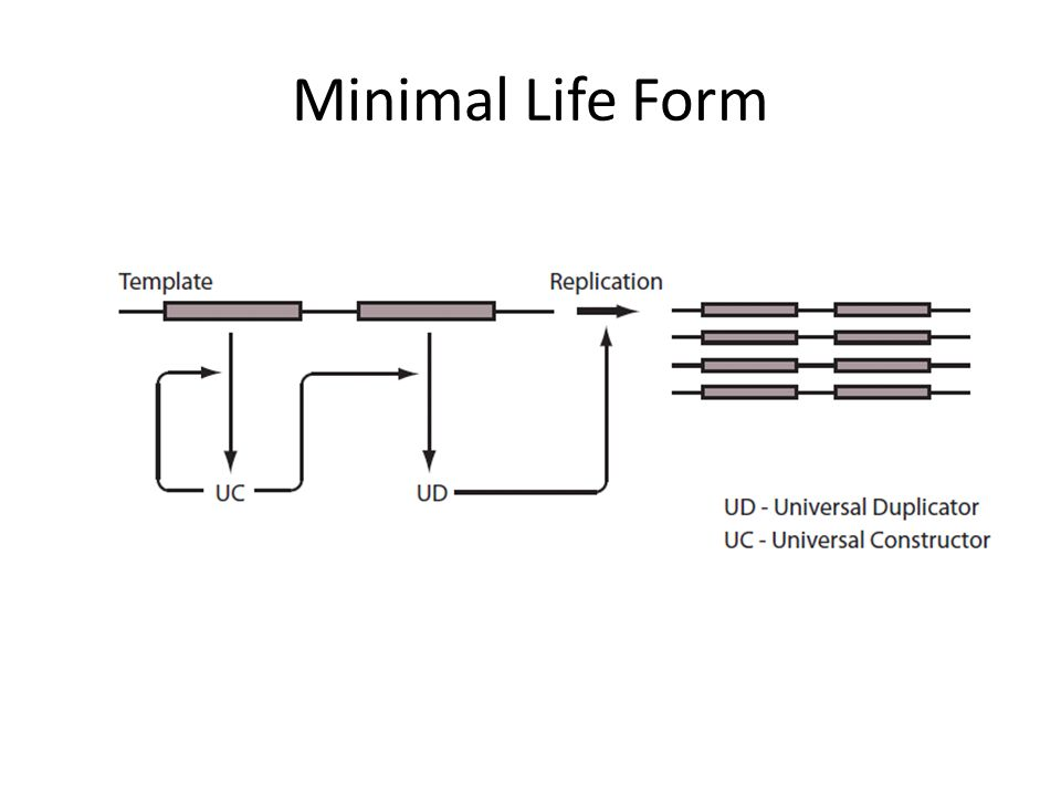 Minimal Life Form