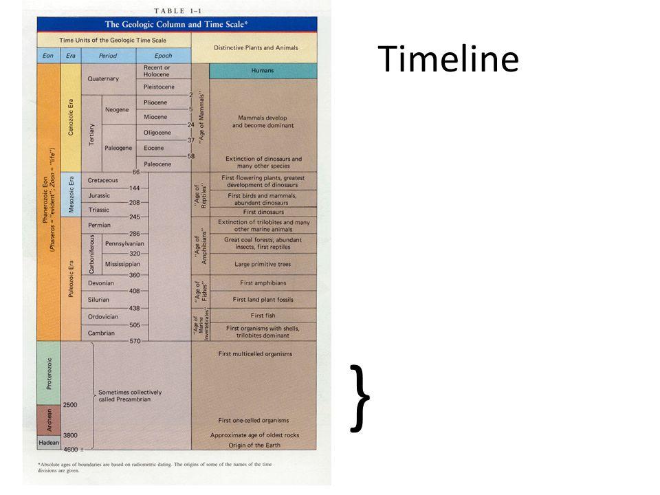 Timeline }