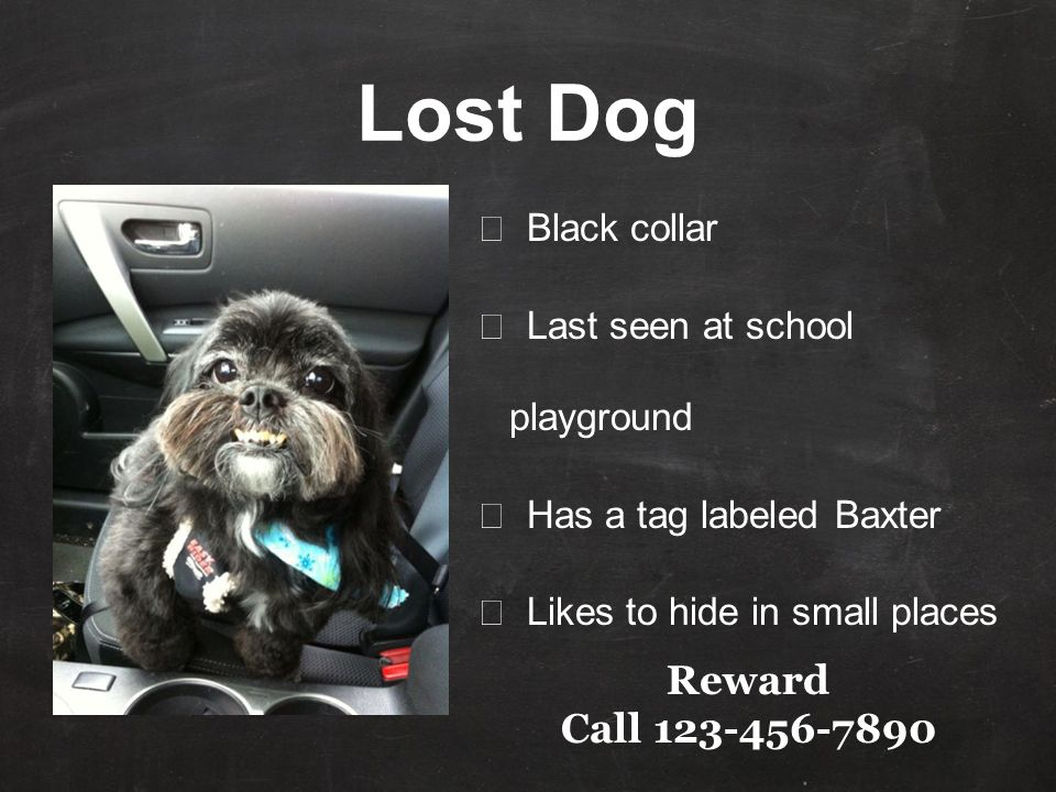★ Black collar ★ Last seen at school playground ★ Has a tag labeled Baxter ★ Likes to hide in small places Reward Call 123-456-7890 Lost Dog
