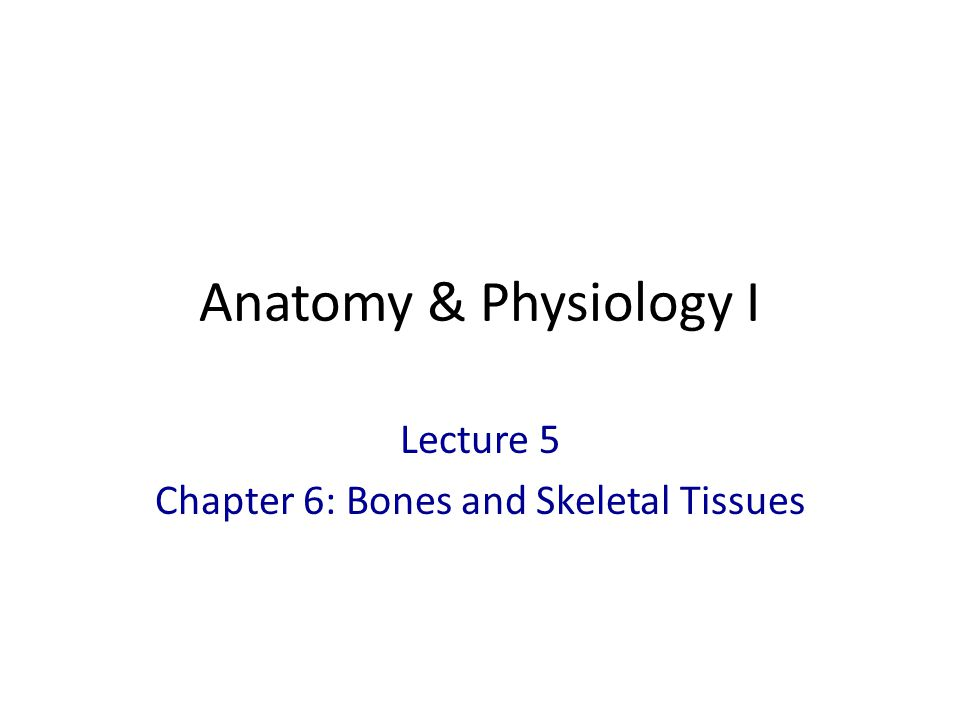 Flat Bones Thin, flat, slightly curved Sternum, scapulae, ribs, most skull bones