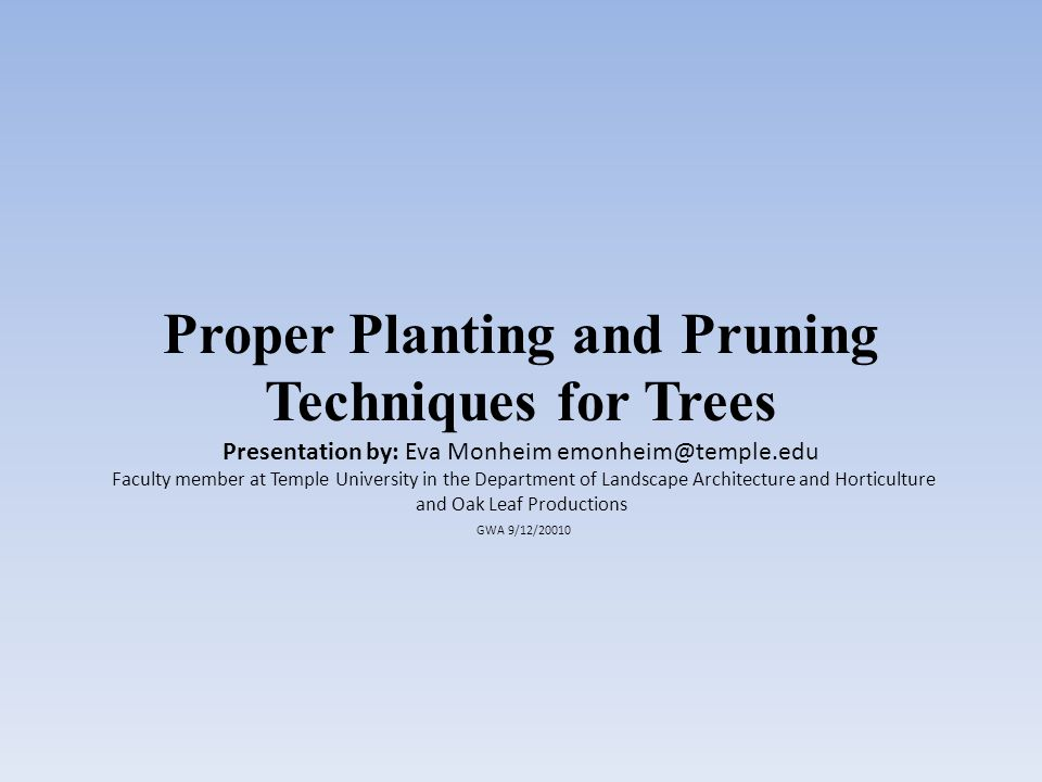 Drawbacks to Container Trees If the trees have been growing to long in the container – their roots may be to girdled