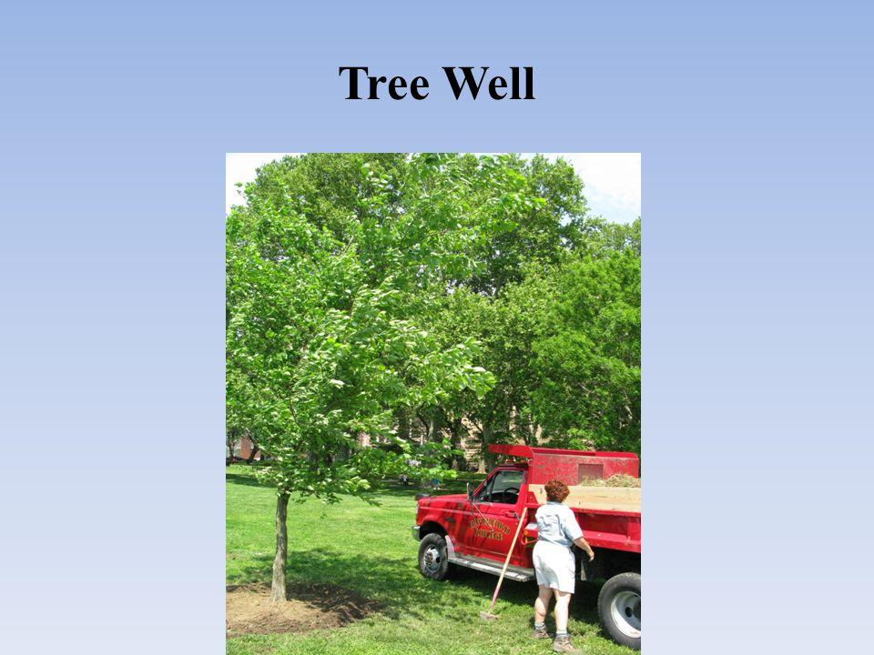 Tree Well
