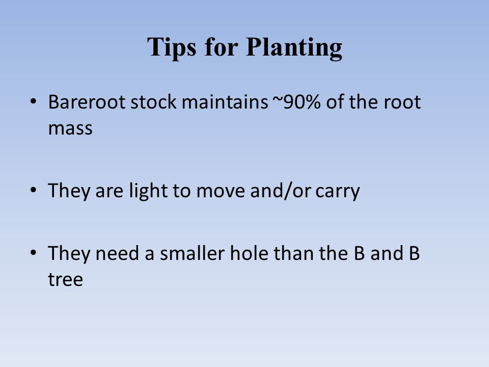 Tips for Planting Bareroot stock maintains ~90% of the root mass They are light to move and/or carry They need a smaller hole than the B and B tree