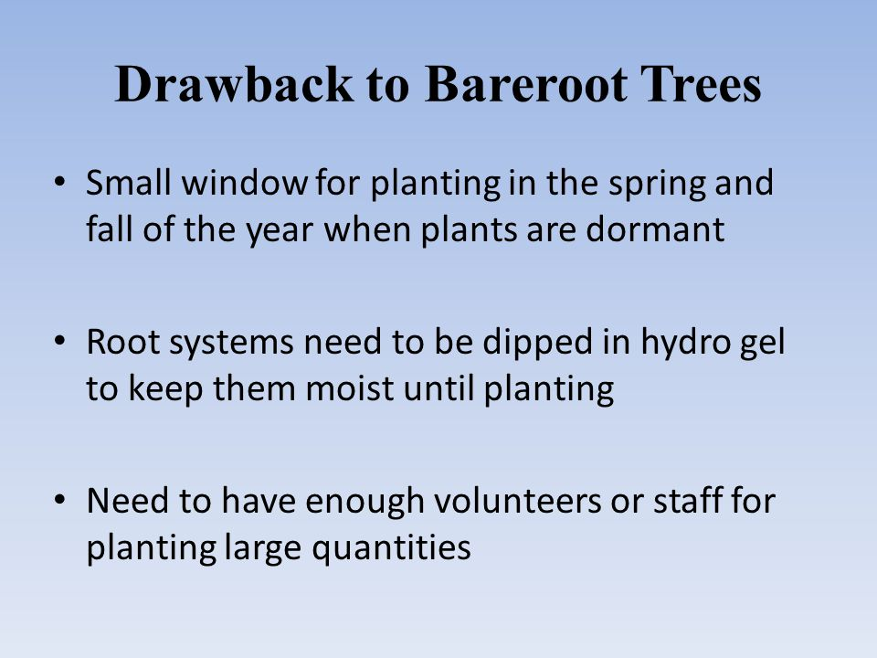 Drawback to Bareroot Trees Small window for planting in the spring and fall of the year when plants are dormant Root systems need to be dipped in hydro gel to keep them moist until planting Need to have enough volunteers or staff for planting large quantities