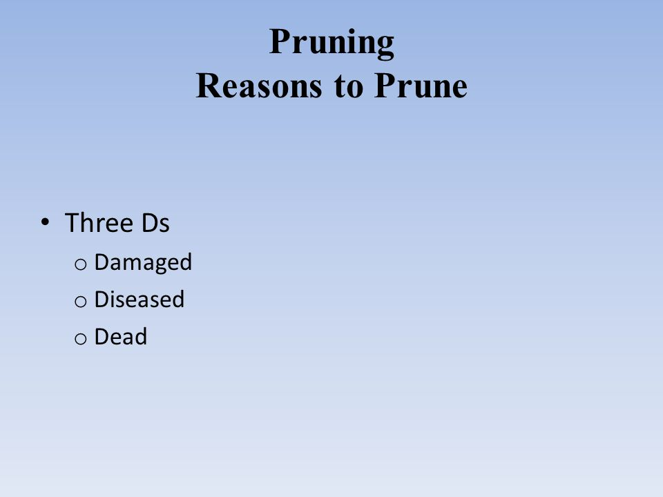 Pruning Reasons to Prune Three Ds o Damaged o Diseased o Dead
