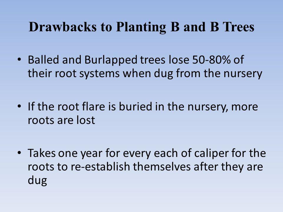 Understanding Tree Anatomy