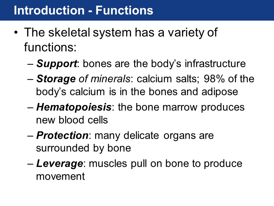 Introduction - components The Bones - about 206 –Bone tissue, or osseous tissue, is the major component of the skeletal system.