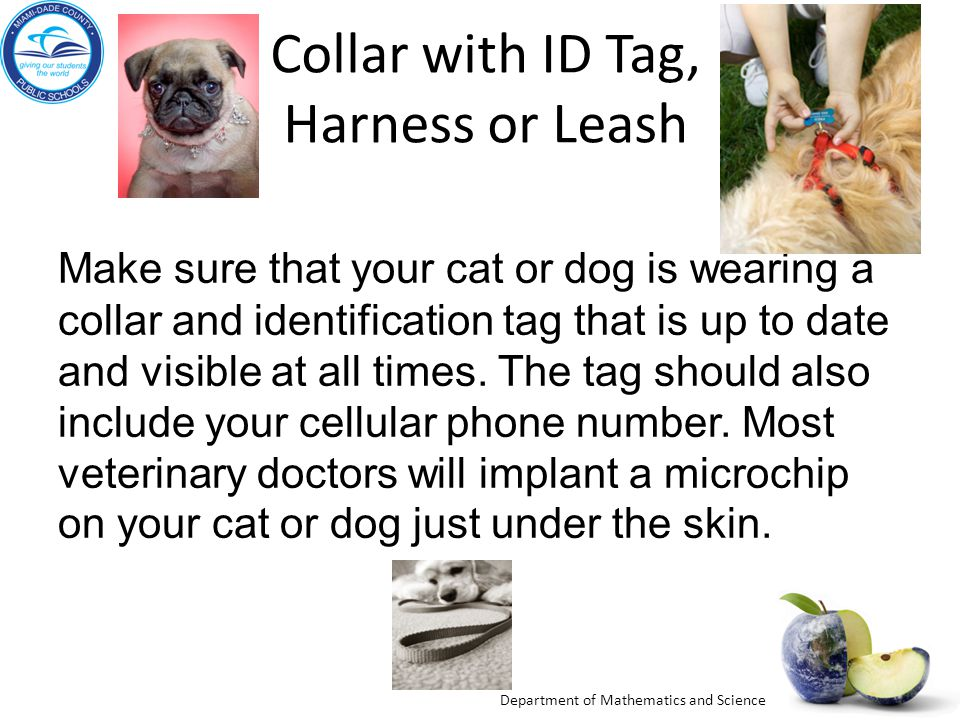 Department of Mathematics and Science Collar with ID Tag, Harness or Leash Make sure that your cat or dog is wearing a collar and identification tag that is up to date and visible at all times.