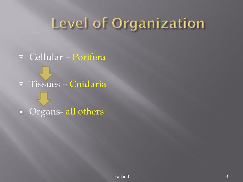  Cellular – Porifera  Tissues – Cnidaria  Organs- all others Earland4