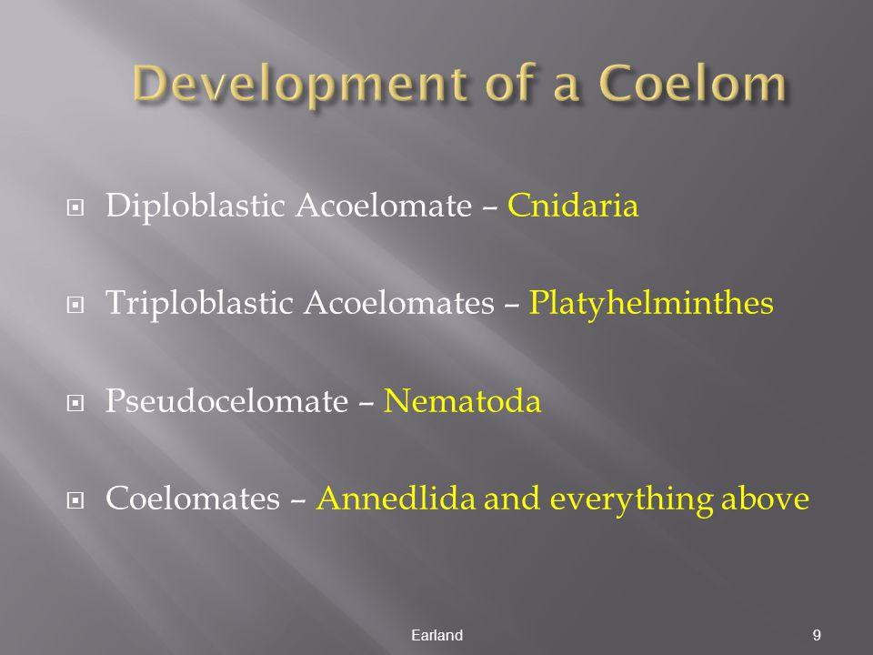 Diploblastic Acoelomate – Cnidaria  Triploblastic Acoelomates – Platyhelminthes  Pseudocelomate – Nematoda  Coelomates – Annedlida and everything