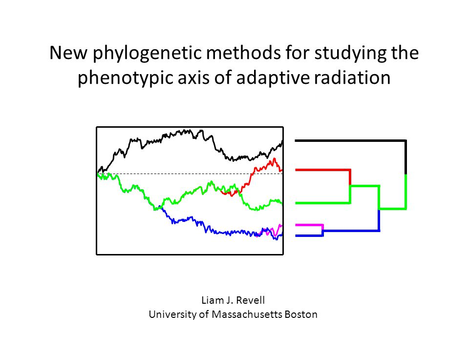New phylogenetic methods for studying the phenotypic axis of adaptive radiation Liam J.