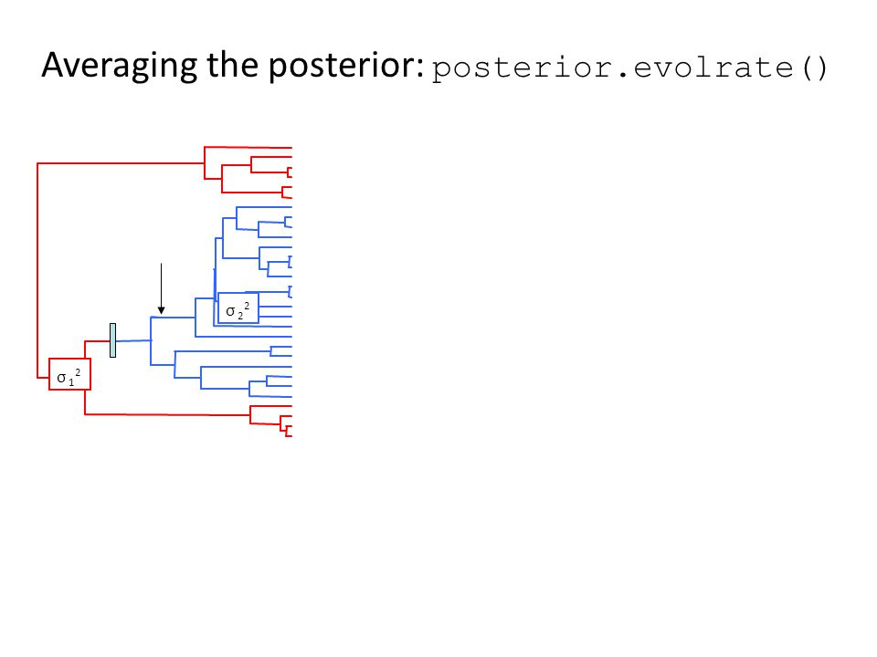 Averaging the posterior: posterior.evolrate() σ 2 2 σ 1 2