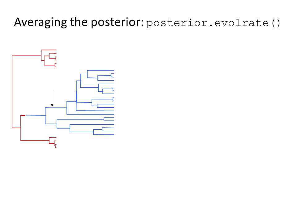 Averaging the posterior: posterior.evolrate()