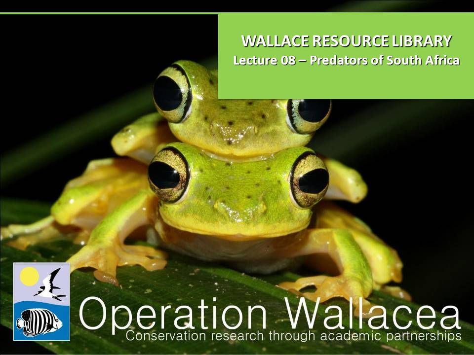 WALLACE RESOURCE LIBRARY Lecture 08 – Predators of South Africa WALLACE RESOURCE LIBRARY Lecture 08 – Predators of South Africa