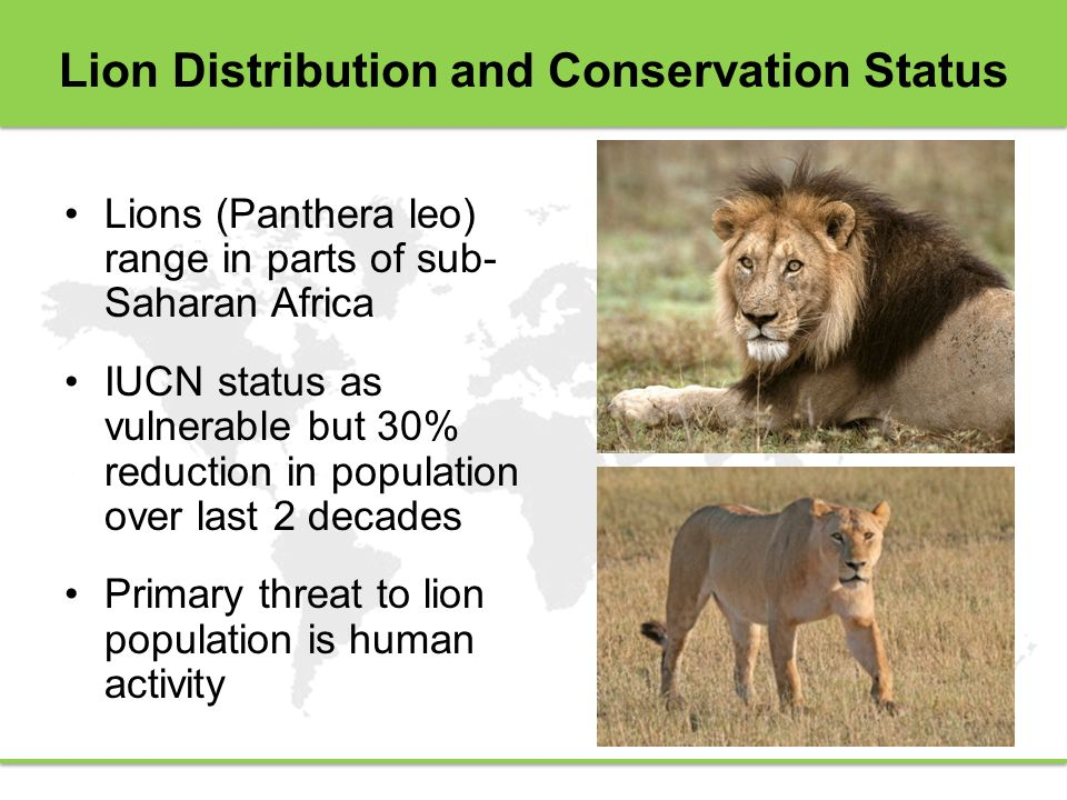Lion Distribution and Conservation Status Lions (Panthera leo) range in parts of sub- Saharan Africa IUCN status as vulnerable but 30% reduction in population over last 2 decades Primary threat to lion population is human activity