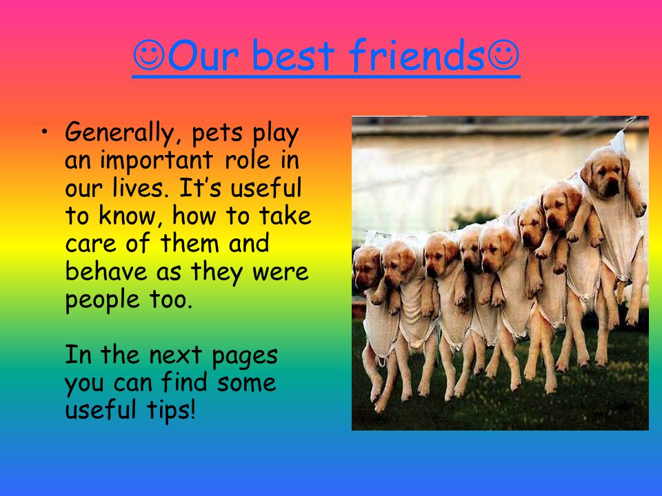 Our best friends Generally, pets play an important role in our lives.