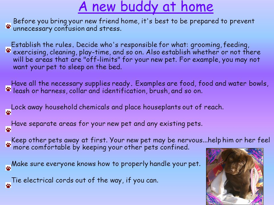 A new buddy at home Before you bring your new friend home, it s best to be prepared to prevent unnecessary confusion and stress.