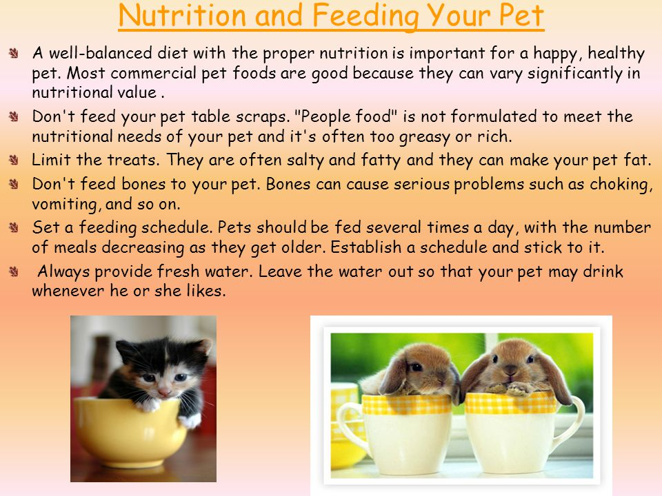 Nutrition and Feeding Your Pet A well-balanced diet with the proper nutrition is important for a happy, healthy pet.