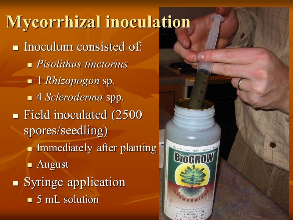Inoculum consisted of: Inoculum consisted of: Pisolithus tinctorius Pisolithus tinctorius 1 Rhizopogon sp. 1 Rhizopogon sp. 4 Scleroderma spp. 4 Scler