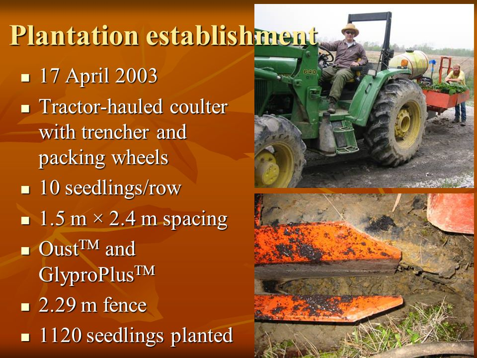 17 April 2003 17 April 2003 Tractor-hauled coulter with trencher and packing wheels Tractor-hauled coulter with trencher and packing wheels 10 seedlings/row 10 seedlings/row 1.5 m × 2.4 m spacing 1.5 m × 2.4 m spacing Oust TM and GlyproPlus TM Oust TM and GlyproPlus TM 2.29 m fence 2.29 m fence 1120 seedlings planted 1120 seedlings planted Plantation establishment