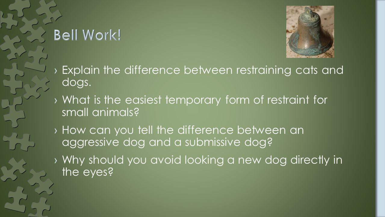 ›Explain the difference between restraining cats and dogs.