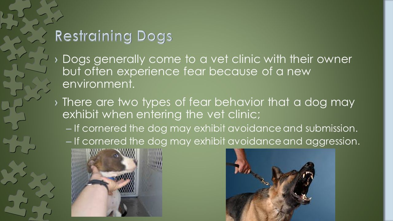 ›Dogs generally come to a vet clinic with their owner but often experience fear because of a new environment.