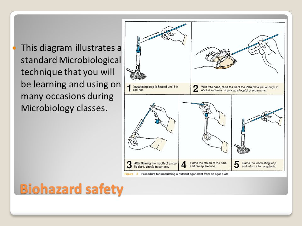 Biohazard safety This diagram illustrates a standard Microbiological technique that you will be learning and using on many occasions during Microbiology classes.