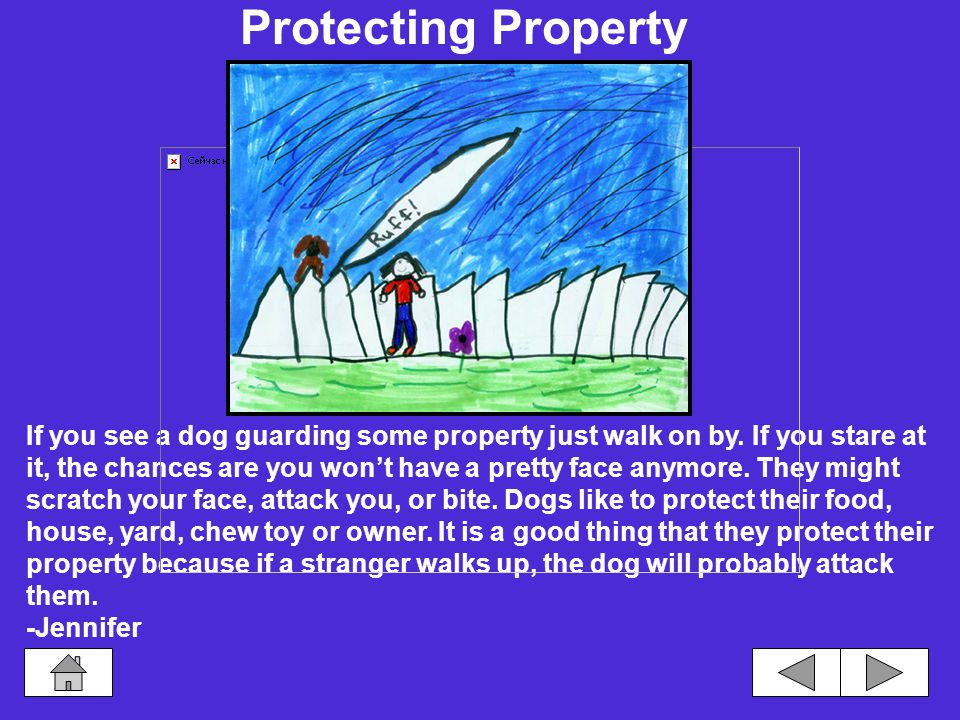 Safety Protecting Property How to Pet a Dog Strange Dogs Walking With a Leash