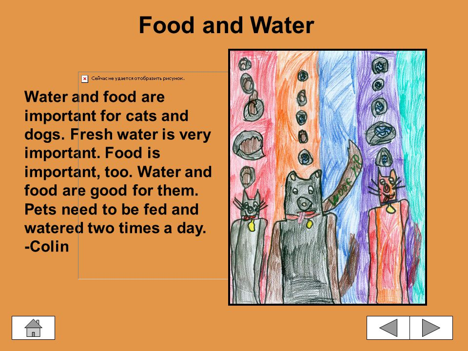 Water and food are important for cats and dogs.Fresh water is very important.