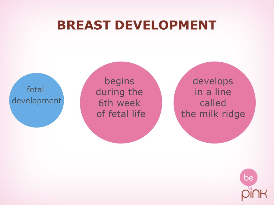 BREAST DEVELOPMENT fetal development begins during the 6th week of fetal life develops in a line called the milk ridge