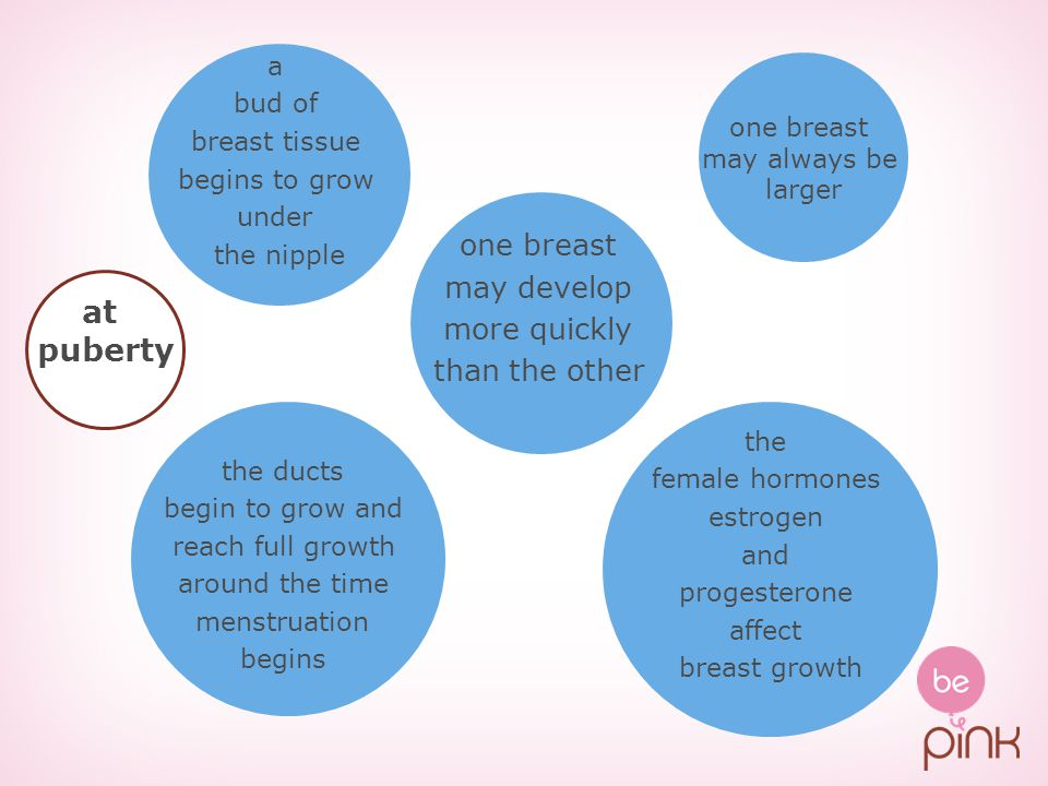 the ducts begin to grow and reach full growth around the time menstruation begins one breast may develop more quickly than the other the female hormon