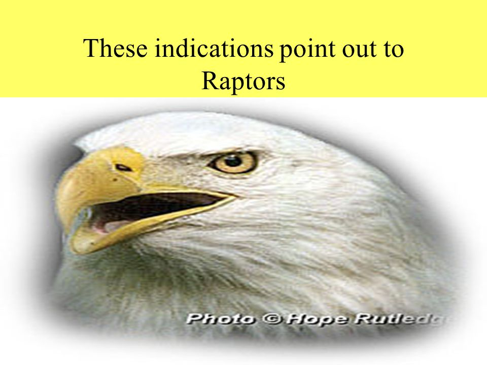 By Dr. Sunil Anand www.drsunilanand.com These indications point out to Raptors