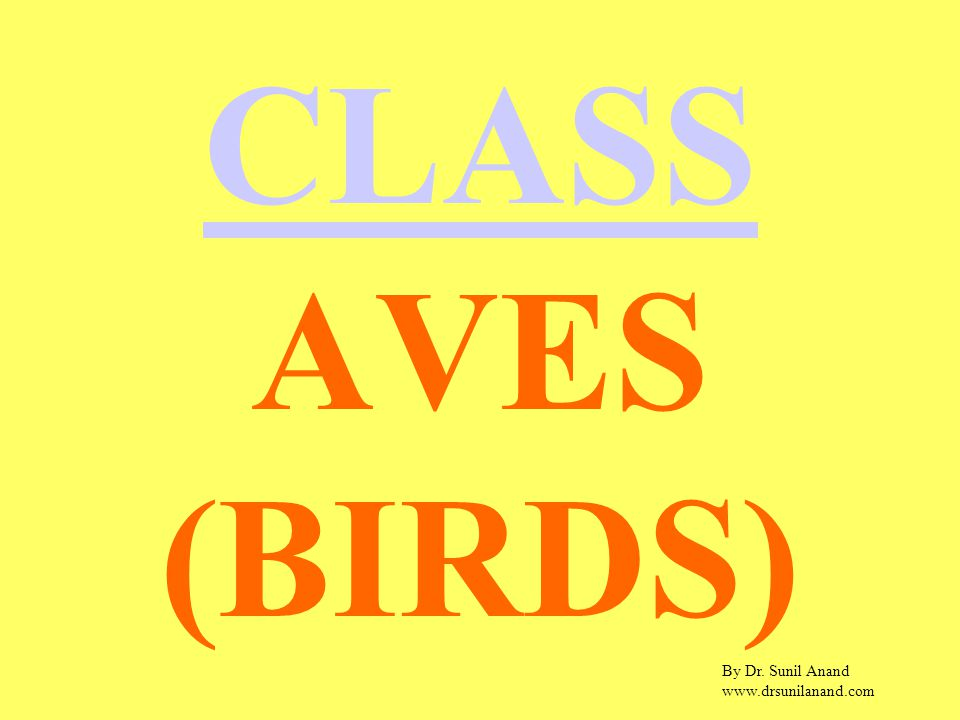 By Dr. Sunil Anand www.drsunilanand.com CLASS AVES (BIRDS)